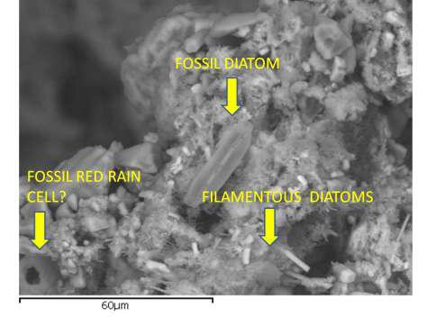 alieno fossile2