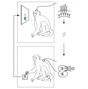 monkey chip