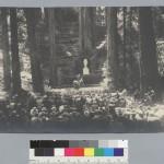 BohemianGrove186