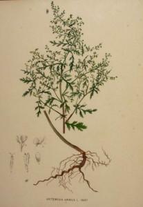 artemisina (1)